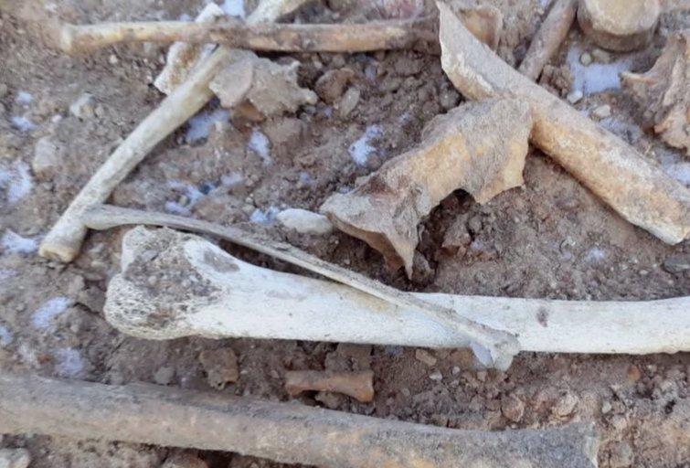 Žmonių kaulai (nuotr. stop kadras)