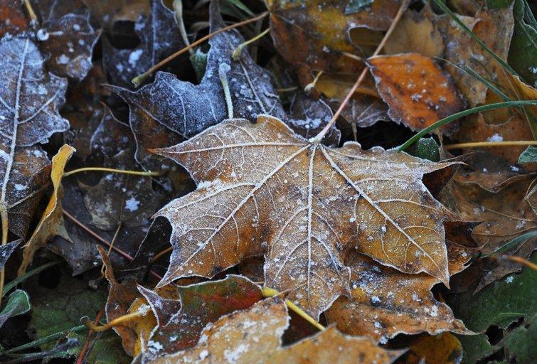 Šaltas ruduo (nuotr. SCANPIX)