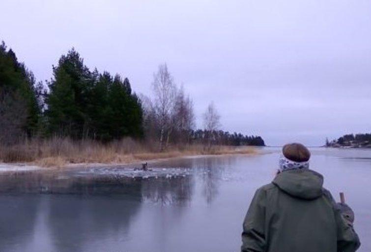 Briedžio gelbėjimo operacija Švedijoje, Youtube medžiaga