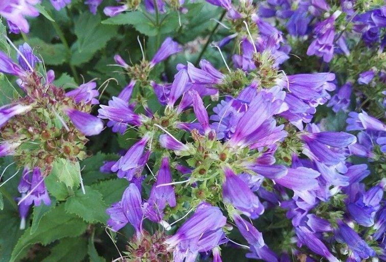 Vidutinio atsparumo vienmetės gėlės turi ilgesnį vegetacijos periodą, todėl jos sėjamos anksčiau – kovo–balandžio mėn. (Nuotr. valstietis.lt)