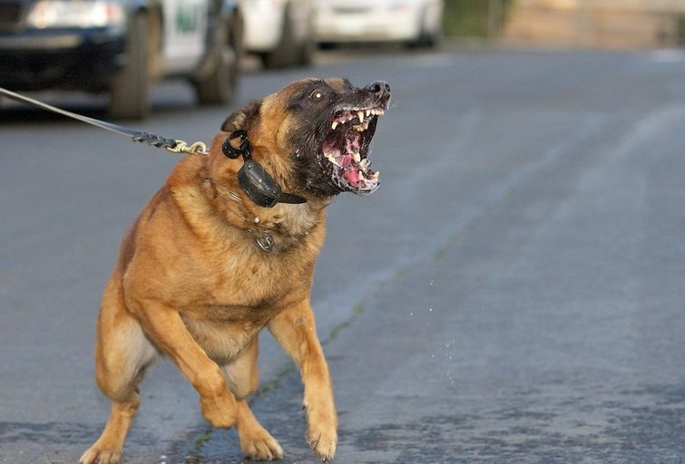 Agresyvus šuo (nuotr. Fotolia.com)
