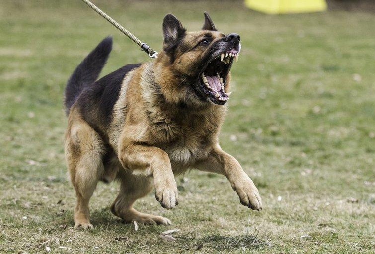 Agresyvus šuo (nuotr. Shutterstock.com)