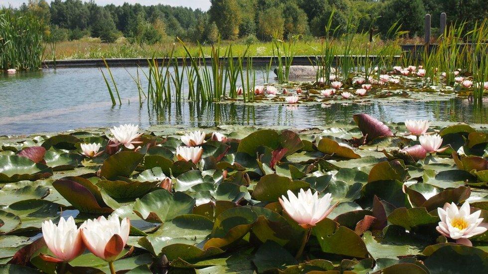 Lietuvos gamta labai graži – ji įkvepia kurti.
