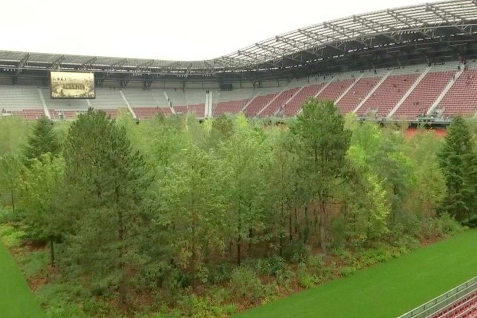 Miškas stadione (nuotr. stop kadras)