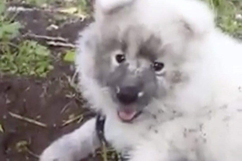 Nufilmavo darže besidarbuojantį šunį: teikia reikalingą paslaugą