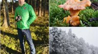 Paulius Čiūdaras pasidalijo žiemą rastų grybų nuotraukomis (tv3.lt fotomontažas)