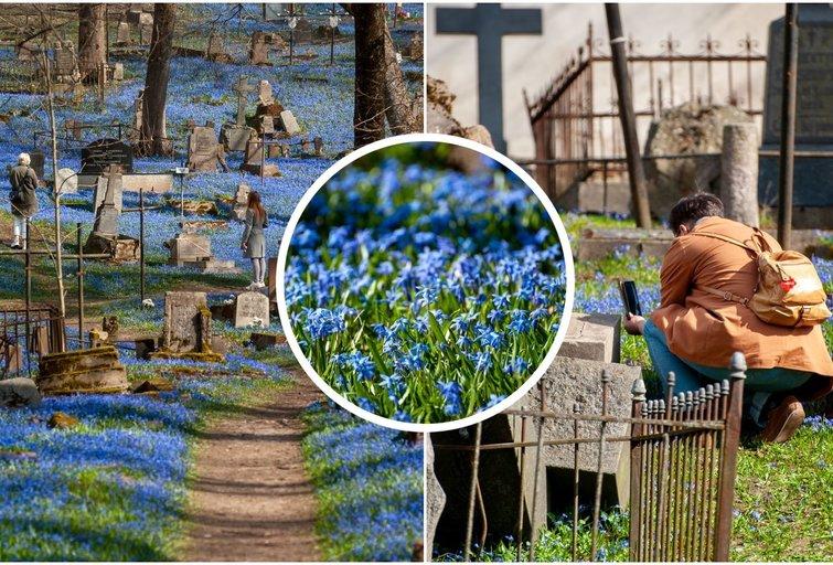 Scylės Bernardinų kapinėse (nuotr. Fotodiena.lt)