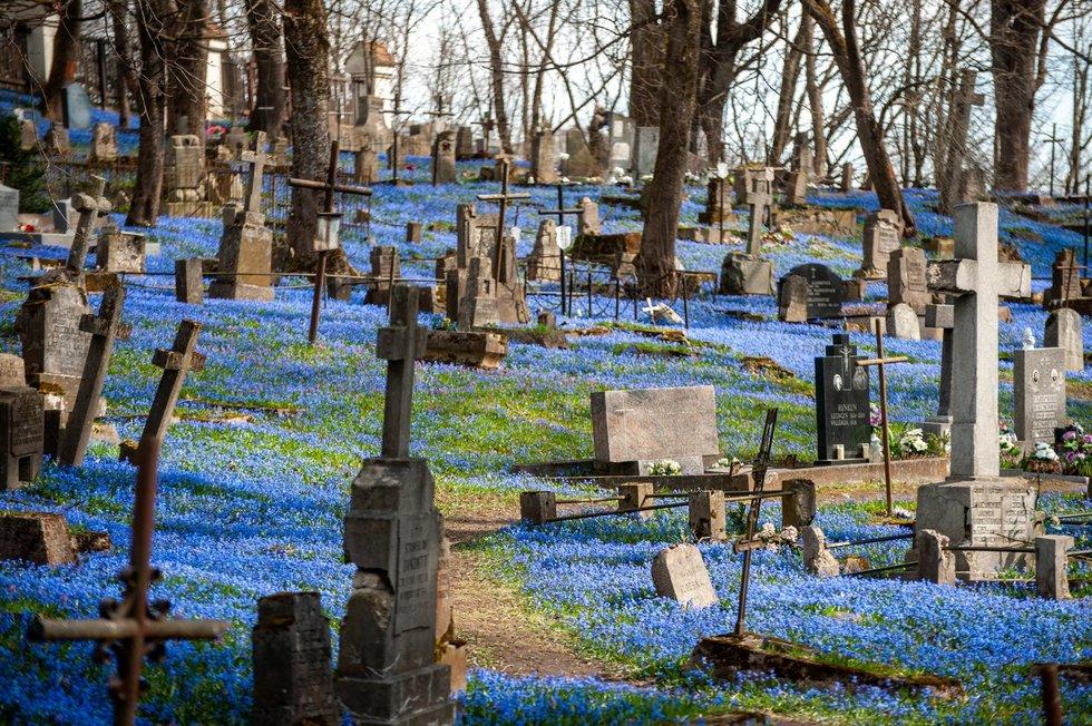 Scylės Bernardinų kapinėse
