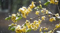 Bundantis pavasaris  (nuotr. Fotodiena.lt)