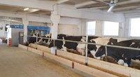 Pieno supirkimas ir eksportas sumažėjo (bendrovės nuotr.)