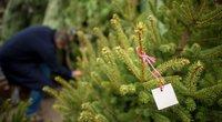 Kalėdinių eglučių pirkimas  (nuotr. Shutterstock.com)