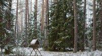 Miškas žiemą (Fotobankas)