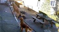 Nufilmavo neįtikėtiną šuns poelgį: drąsos pakako tik vienam