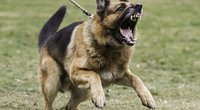Agresyvus šuo. Asociatyvi nuotrauka (nuotr. Shutterstock.com)