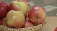 Obuoliai (nuotr. stop kadras)
