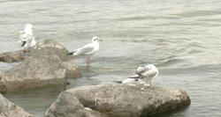 Baltijos jūra – viena labiausiai užterštų: joje jau ir žuvys keičia lytį