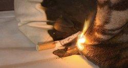Šiemet gaisruose žūsta daugiau nei pernai: ugniagesiai kaltina koronavirusą
