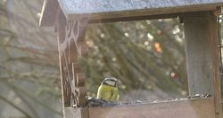 Orai vėsta: norėdami padėti paukščiams, juos prisijaukinti turite jau dabar