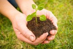 Skubiai įspėja sodininkus ir daržininkus: atlikite šį veiksmą – kitaip rizikuosite savo sveikata