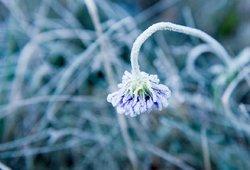 Šaltas pavasaris pasėjo abejonių: kokio derliaus tikėtis ir kaip keisis kainos?