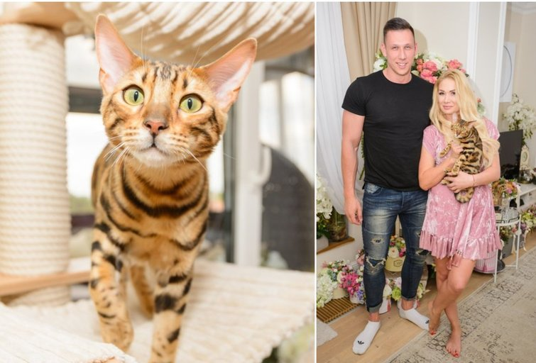 Natalijos Bunkės katinas Maiklas (tv3.lt fotomontažas)