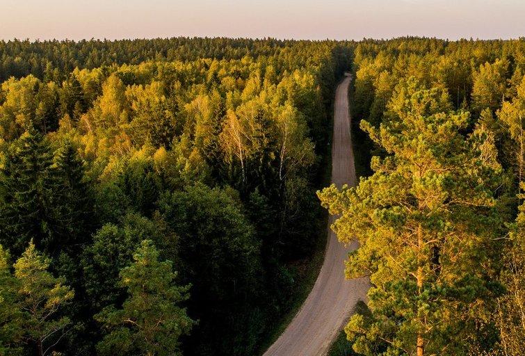 Miškai (Irmantas Gelūnas/Fotobankas)