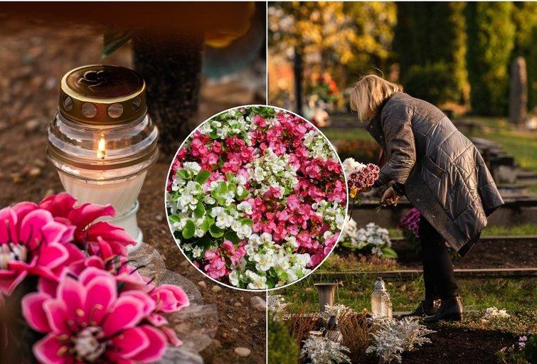 Ekspertė atskleidė, kaip tinkamai apželdinti kapus (tv3.lt fotomontažas)