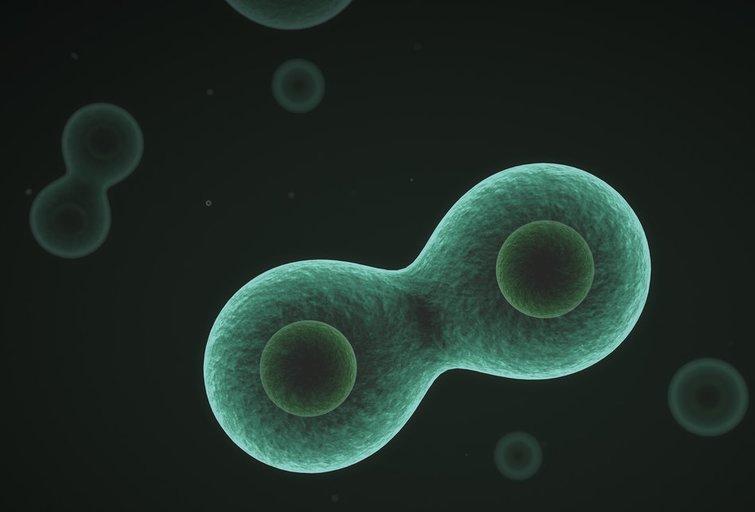 Bakterija (nuotr. Fotolia.com)