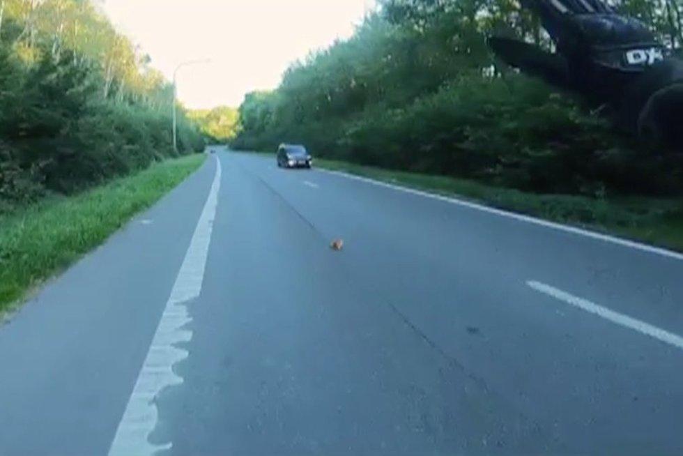 Kačiukas ant kelio (nuotr. stop kadras)