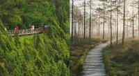 Pažintiniai takai(Nuotr. lithuania.travel)