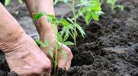 Ūkininkavimas (nuotr. Shutterstock.com)