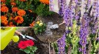 Gėlės (nuotr. Shutterstock.com)