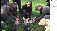 Ornitologų draugija: medžioklėje, kurioje dalyvavo aplinkos viceministrė, nušautos trys saugomos antys (nuotr. Lietuvos ornitologų draugija)