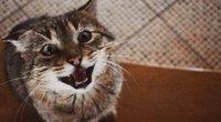 Katinas (Tautginės Paulauskaitės nuotrauka) (nuotr. skaitytojo)