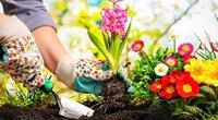 Sodininkystė (Nuotr. valstietis.lt) (nuotr. Shutterstock.com)