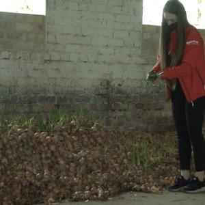 24-erių Greta ūkininkauti pradėjo prieš metus: tonas daržovių jai teks išmesti