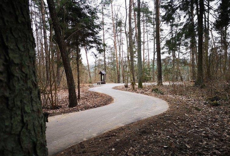Nuo medžių lajų tako veda naujas dviračių kelias ( nuotr. autorių)