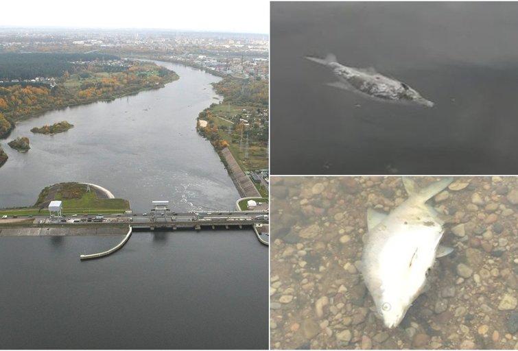 Kauno mariose skaitytojo užfiksuoti vaizdai (Nuotr. tv3.lt fotomontažas)