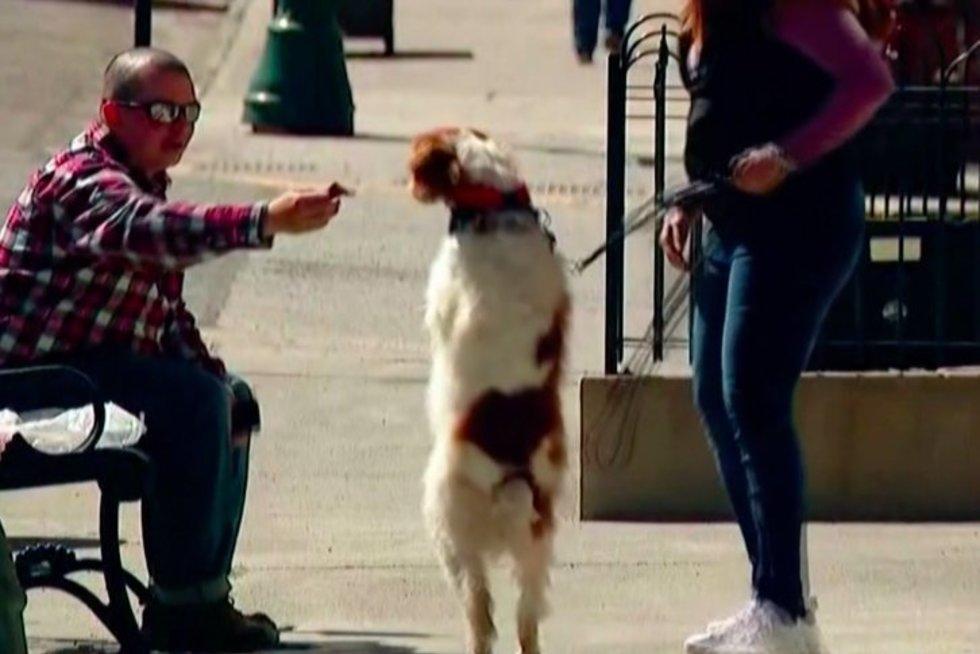 Šuo elgiasi kaip žmogus: vaikšto ir bėgioja ant dviejų kojų  (nuotr. stop kadras)
