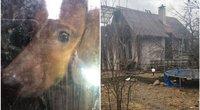 Apleistame sostinės name įkalino virš 20 šunų: 2 metus neišleidžia į lauką