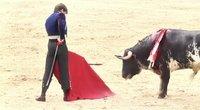 TV3 Žinios. Ispanijoje grįžo korida: bulius trypė nelaimėlį matadorą (nuotr. stop kadras)