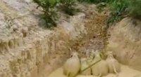 drambliai (nuotr. stop kadras)