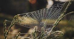 Vorai užplūdo Lietuvą: mokslininkai atskleidė to priežastis