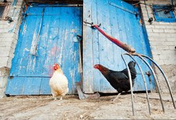 """Mokslininkai perspėja: 46 šalyse aptikta paukščių gripo atmaina gali sukelti """"pragaištingą pandemiją"""""""