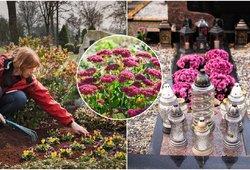 Kapuose sodinkite šias gėles: nereikės dažnai laistyti, ištvers karščius