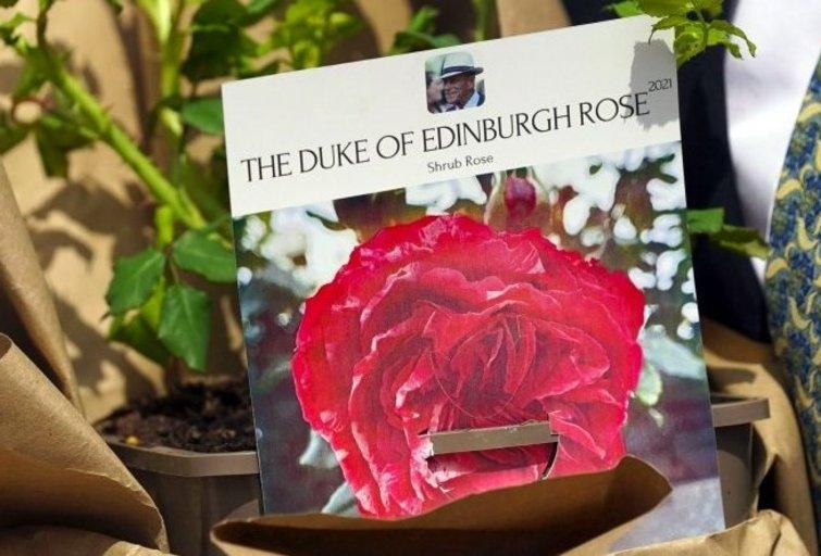Princo Philipo 100-čiui paminėti išvesta ir karalienei padovanota nauja rožė  (nuotr. 123rf.com)