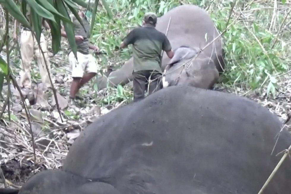 Tragedija Indijoje: žaibas nužudė 18 dramblių (nuotr. stop kadras)