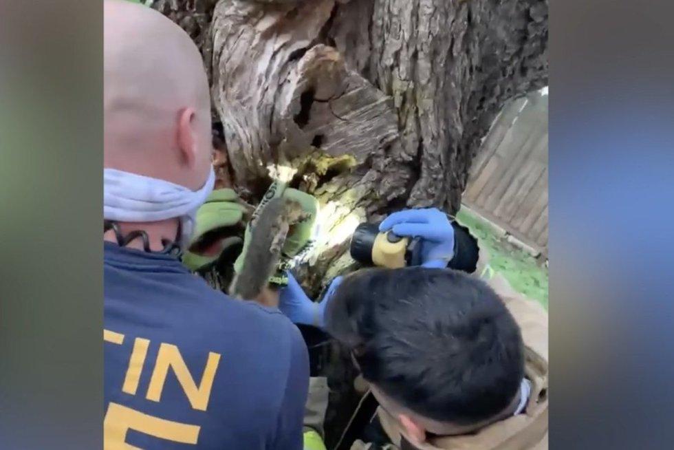 Ugniagesių laukė neeilinė užduotis – vadavo medyje įstrigusį gyvūną