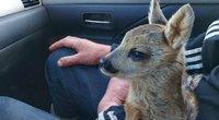 Aplinkosaugininkai: paėmę laukinį gyvūno jauniklį, galite padaryti tik žalos