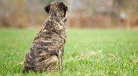 Šuo (nuotr. SCANPIX)